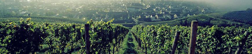 Weingut Adeneuer Spätburgunder