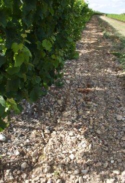 Weingut Battenfeld Spanier Kalkboden vom Frauenberg