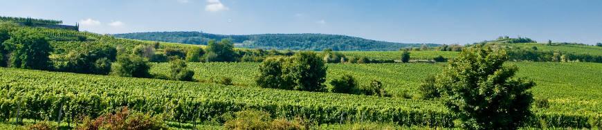 Weingut Pfeffingen Ungsteiner Herrenberg