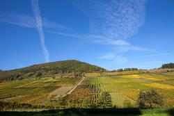 Weingut Rebholz Birkweiler Kastanienbusch