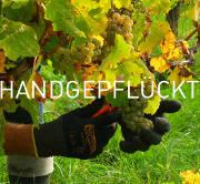 Weingut Tesch Weißburgunder handpicked